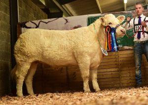 reserve-heifer-champion-sheehills-jacquelle-shown-by-david-kilkenny