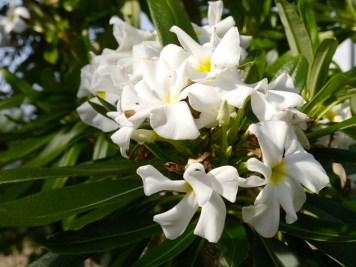 Ma journée de rêve à Terre d'Avoine avec A-Derma (4) - Charonbelli's blog beauté