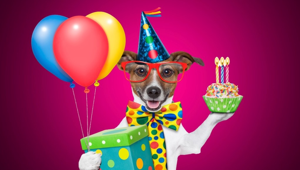 107 Funny Birthday Wishes For Your Loved Ones