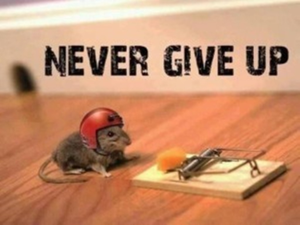 150 Never Give Up Quotes To Help You Stay Strong