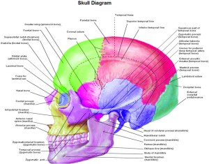 Anatomy | Chart Diagram  Charts, Diagrams, Graphs Best