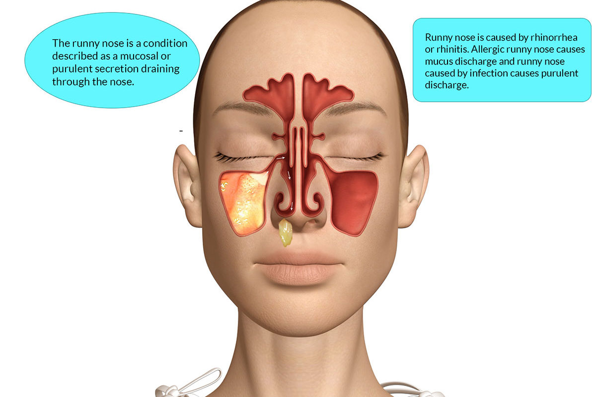 Diagram Nose Mucus 11jsports