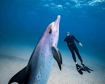 dolphin dive-CC