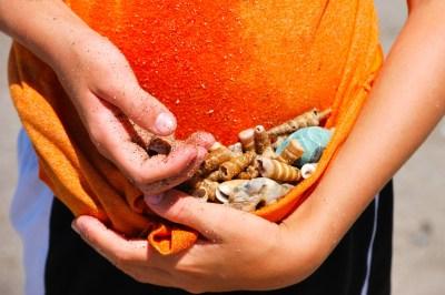hands full of shells