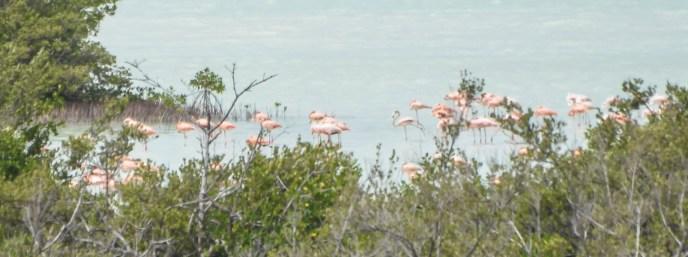 Turks & Caicos North Caicos Flamingos
