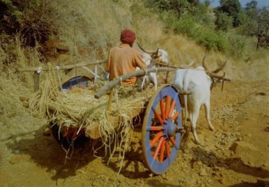 Bullock Cart in our village, ox cart