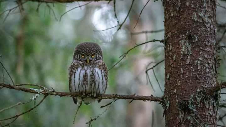 Birds on Trees पक्षी आणि वनस्पती