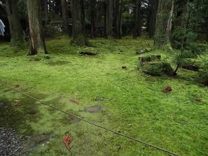 ふるさとの魅力を語ろう!景観づくり団体のつどい 光っている平泉寺の苔/どこまでもアマチュア