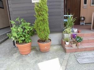 ミニミニ家庭菜園&ミニガーデニング 玄関先の鉢植え/どこまでもアマチュア