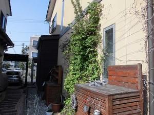 ミニミニ家庭菜園&ミニガーデニング つる植物/どこまでもアマチュア