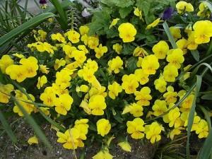 ミニミニ家庭菜園&ミニガーデニング 花壇の花/どこまでもアマチュア