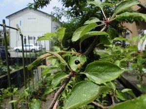 ミニミニ家庭菜園&ミニガーデニング ナミテントウ/どこまでもアマチュア