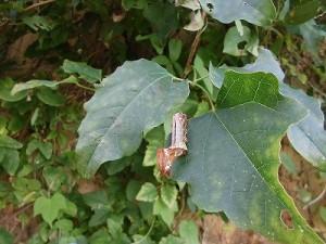 ミニミニ家庭菜園&ミニガーデニング 大きい虫/どこまでもアマチュア