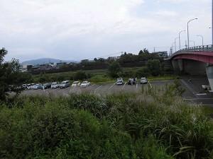 セイタカアワダチソウ駆除作戦 花月橋下駐車場/どこまでもアマチュア