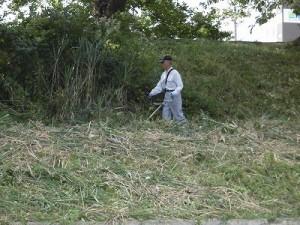 セイタカアワダチソウ駆除作戦 草刈り機作業/どこまでもアマチュア