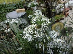 ミニミニ家庭菜園&ミニガーデニング Lesson8_2015 カナブン/どこまでもアマチュア