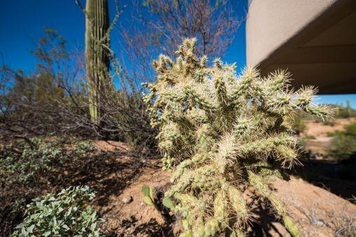 SaguaroNP