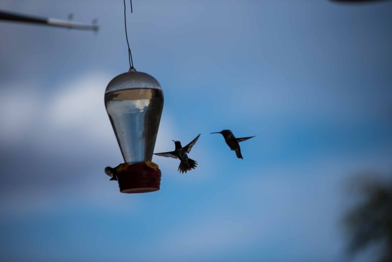 These two hummingbirds almost came to blows heading for the same spot at the feeder.