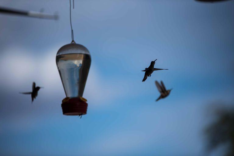 Three hummingbirds flying around.