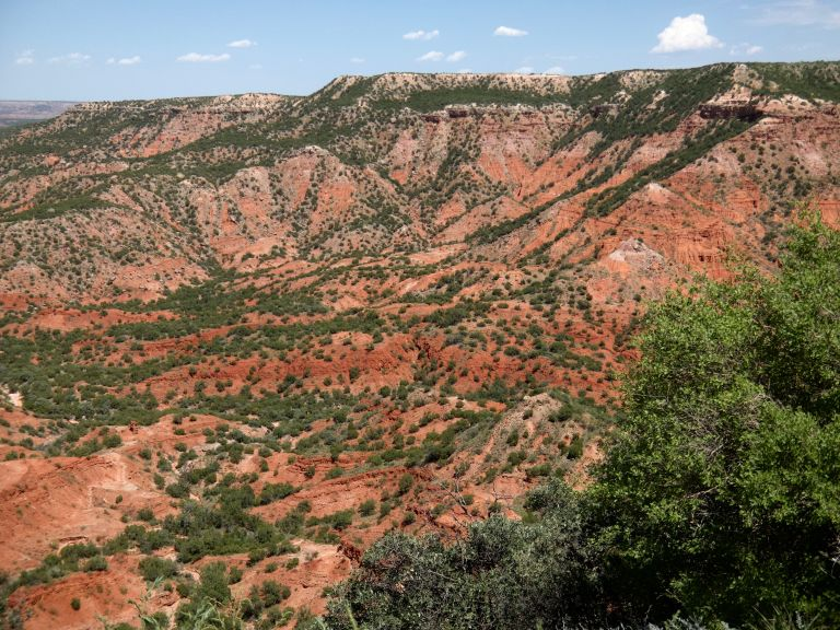 Trees and canyons in the landscape.