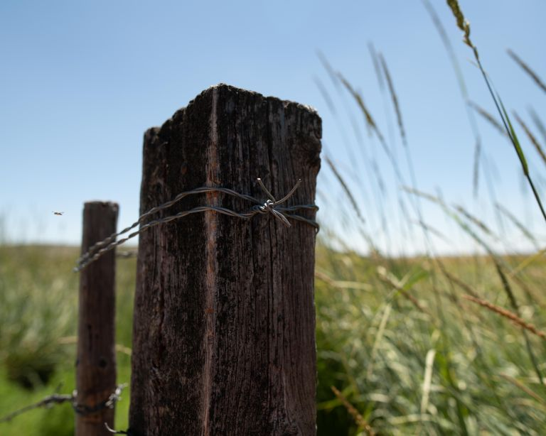 A color photo of a fence post wrapped in barbed wire.