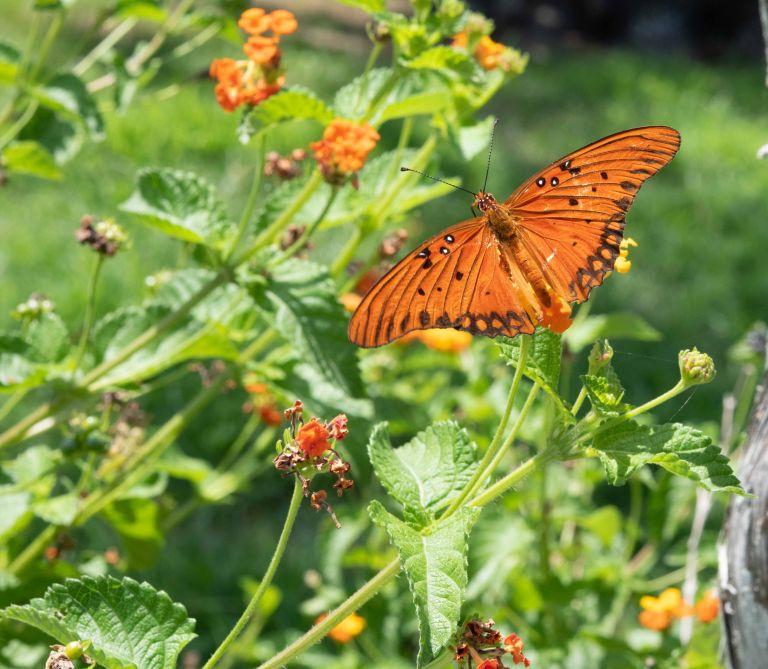 An orange butterfly.
