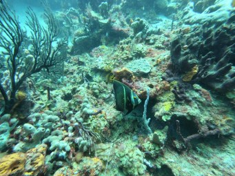Fish and coralls, Anse Chastanet