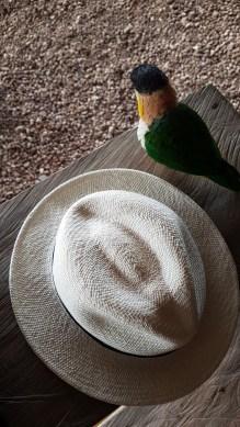Hier war der Hut noch heil, bevor der kleine versucht hat, ihn zu essen, als gerade keiner hinschaute