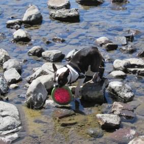 Frisbee rescue effort