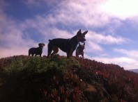 Pups on a hill