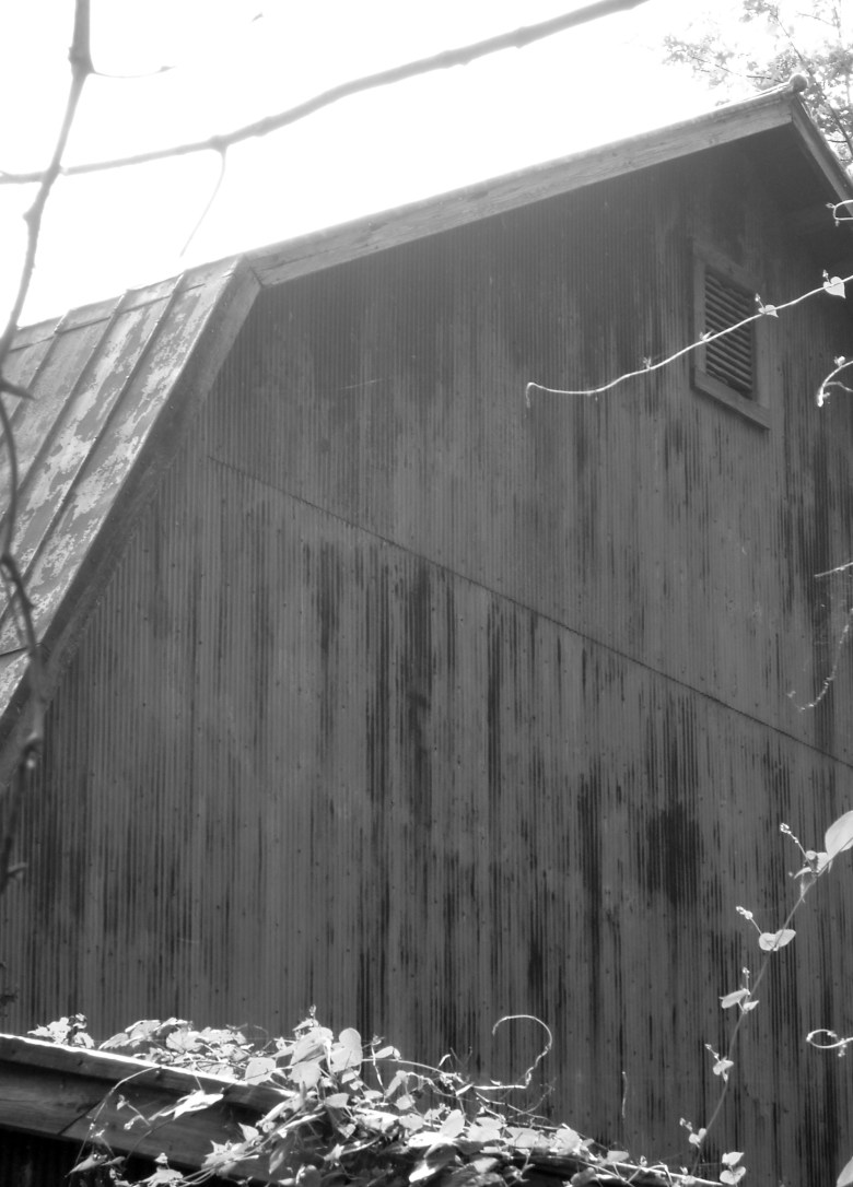 Cee's Black & White Photo Challenge: Abandoned or Alone
