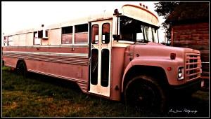 pinkbus1