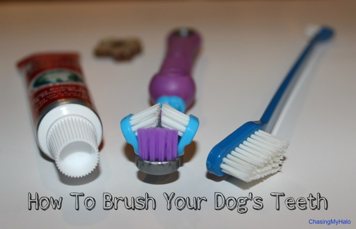 How To (Successfully) Brush Your Dog's Teeth