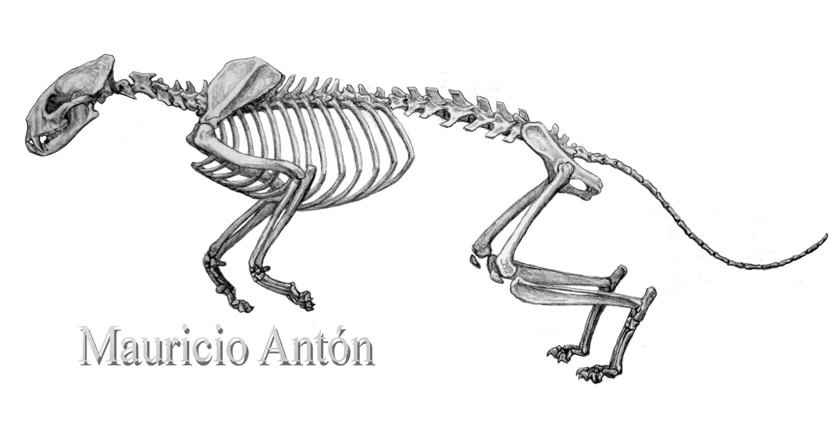 The Beginnings Of Catkind Proailurus