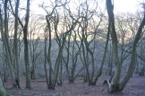 Winter afternoon light coming through trees on the Wrekin