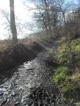 A muddy path in sunlight