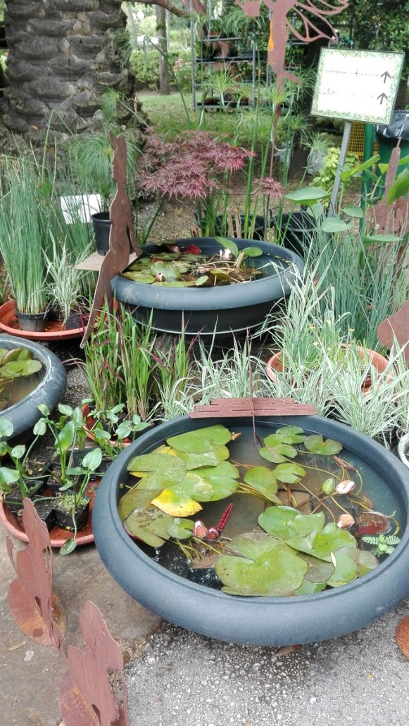 ninfee a planta 2018 orto botanico di napoli