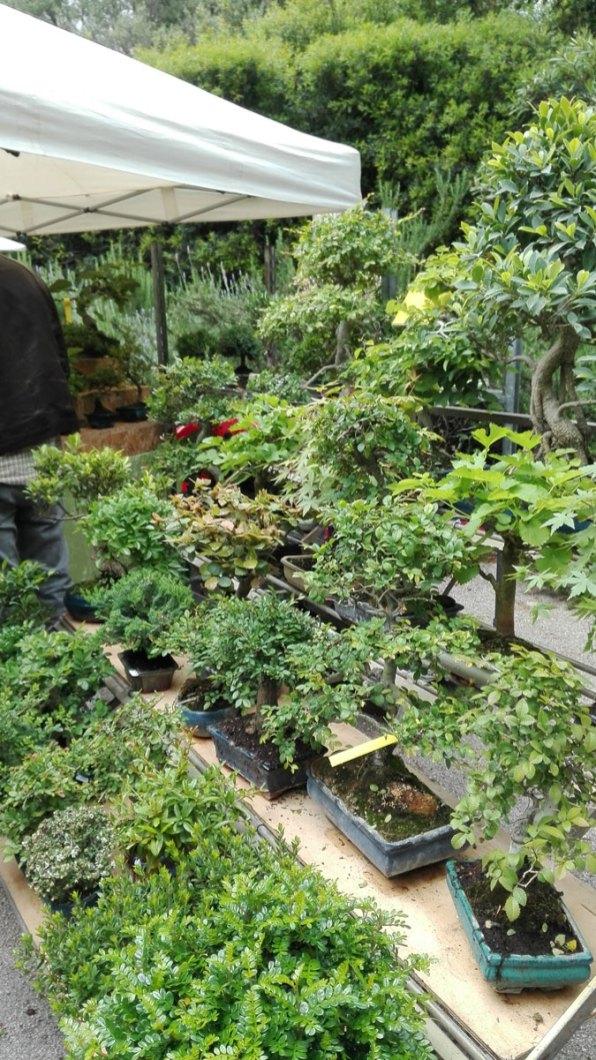bonsai a planta 2018 orto botanico di napoli