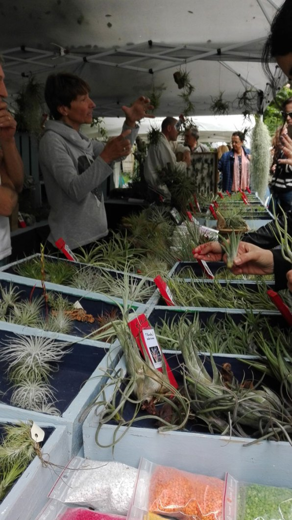 tillandsie a planta 2018 orto botanico di napoli