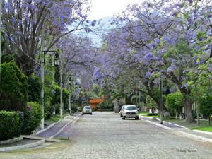 Real de Chapala in Ajijic Mexico