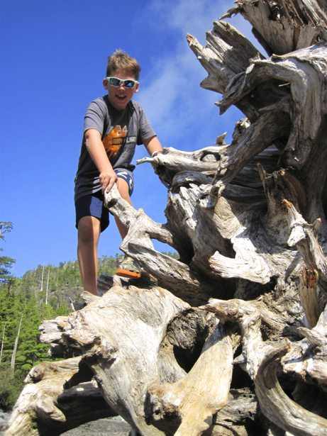 hunter driftwood
