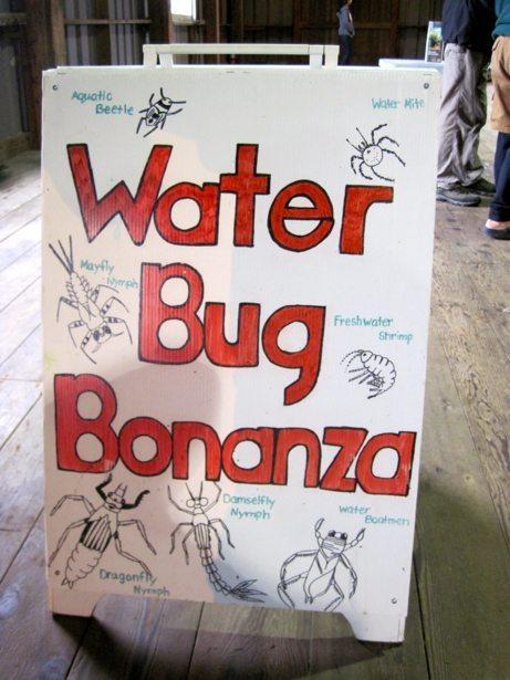water bug bonanza