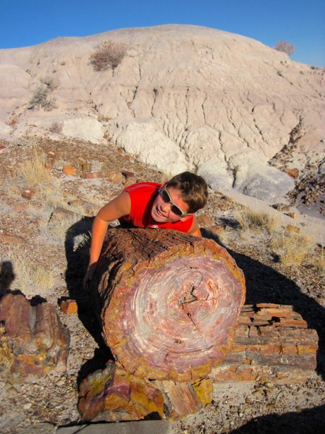 hunter arms full petrified wood