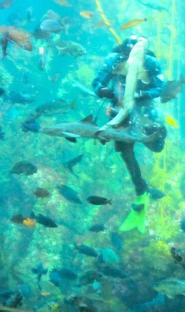 Aquarium | Chasing the Sun