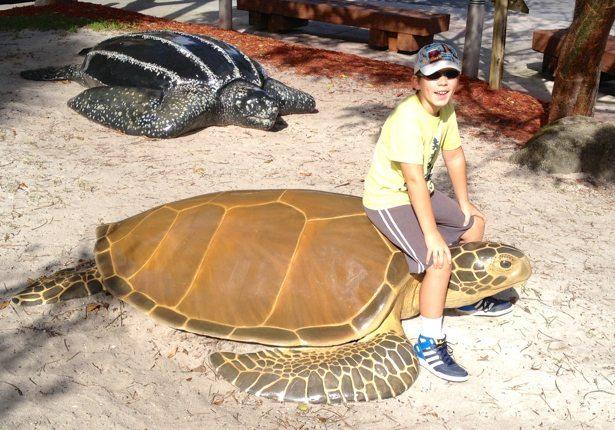 hunter turtles