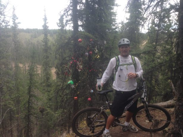 tim christmas tree trail