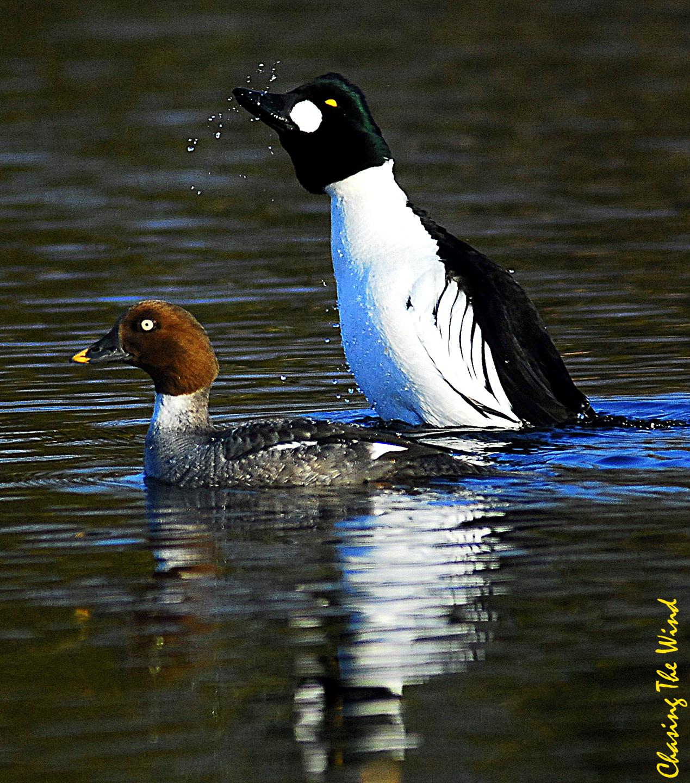 10- Duck DSC_0263