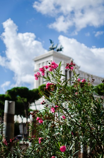 pink-flowers-foro-traiano
