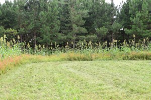 Plan Ahead for Food Plot Success