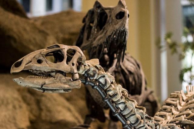 Dryosaurus and Ceratosaurus mounts at the Carnegie Museum of Natural History.